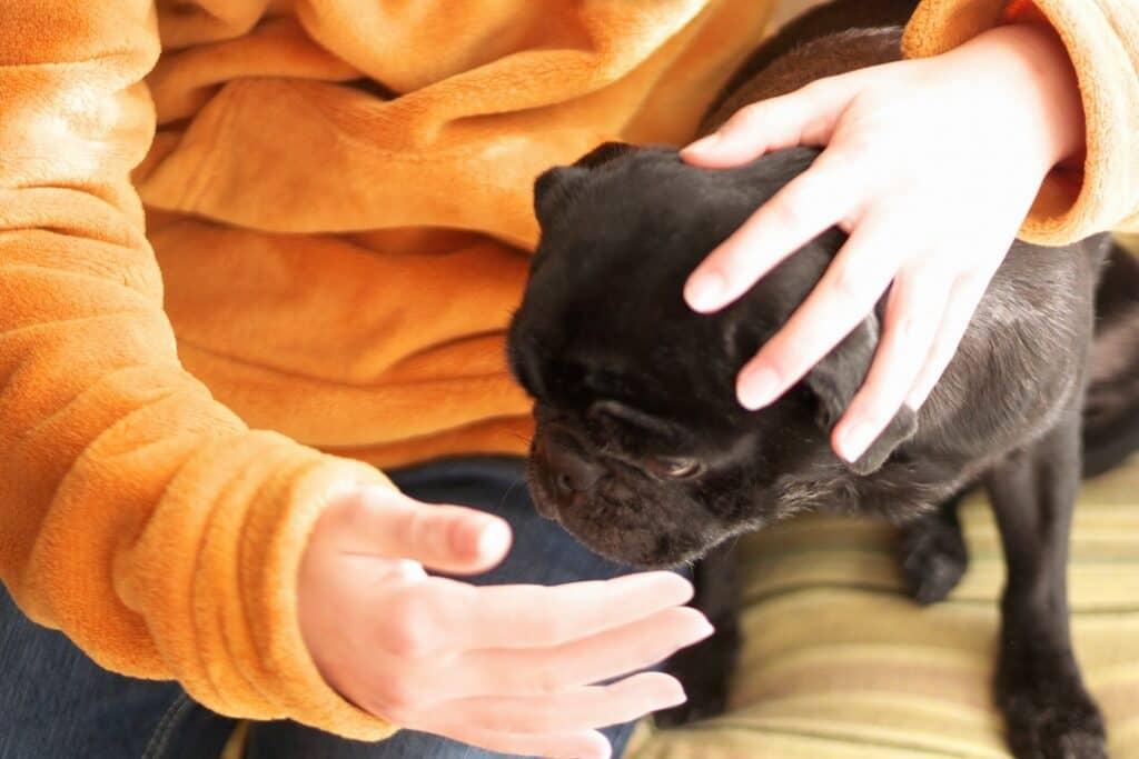 赤ちゃんと犬が一緒に生活するメリット