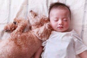 赤ちゃんと犬は仲良く暮らせる? 家族になるために気を付けたい点とは