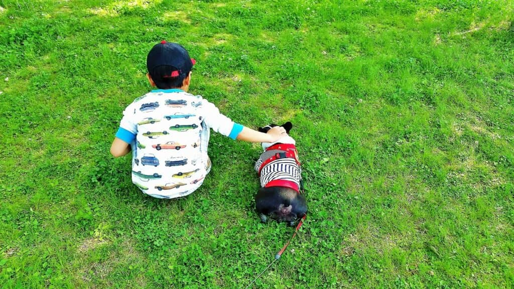 赤ちゃんと犬が暮らす上での注意点も!