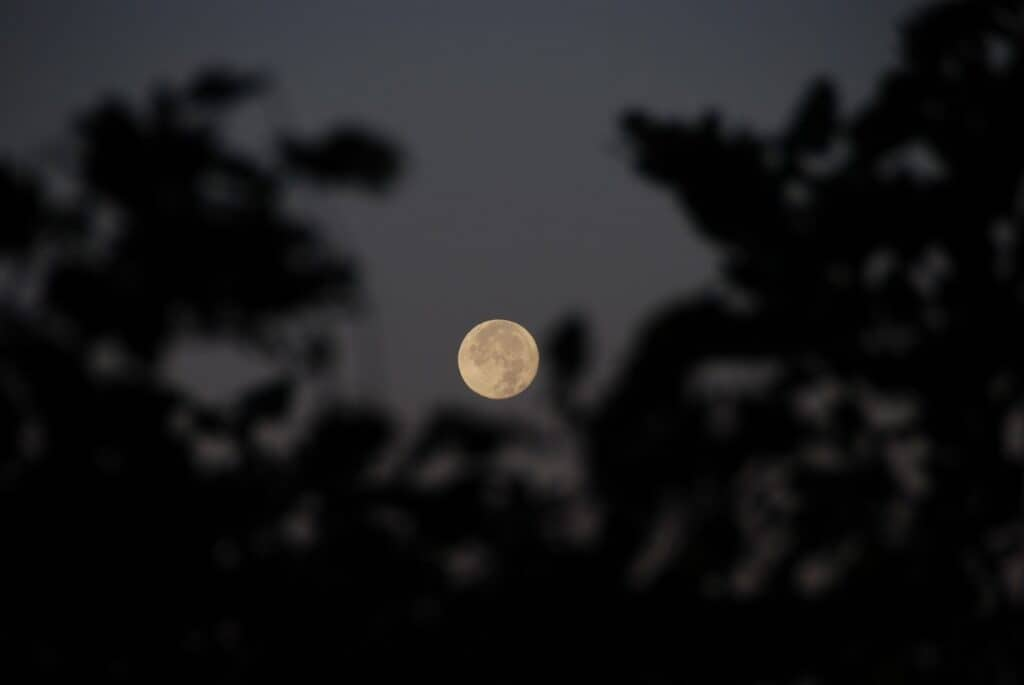 なぜ「満月=出産が多い」といわれるの?