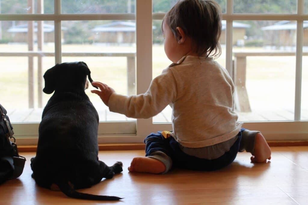 赤ちゃんと犬が一緒に暮らすのにおすすめなアイテムとは?
