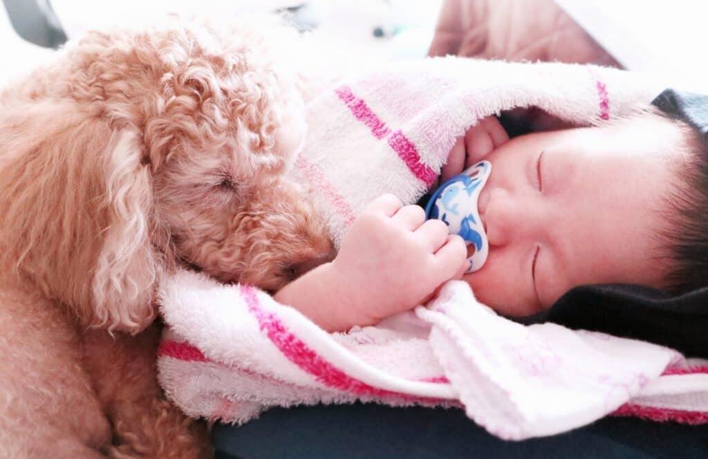 赤ちゃんと犬はいつから暮らせる?
