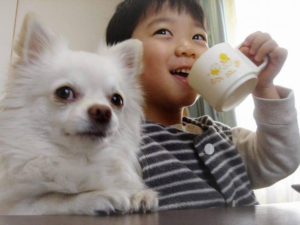 赤ちゃんと犬が仲良く生活するためのポイント