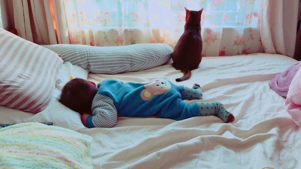 赤ちゃんと猫が同居するメリット
