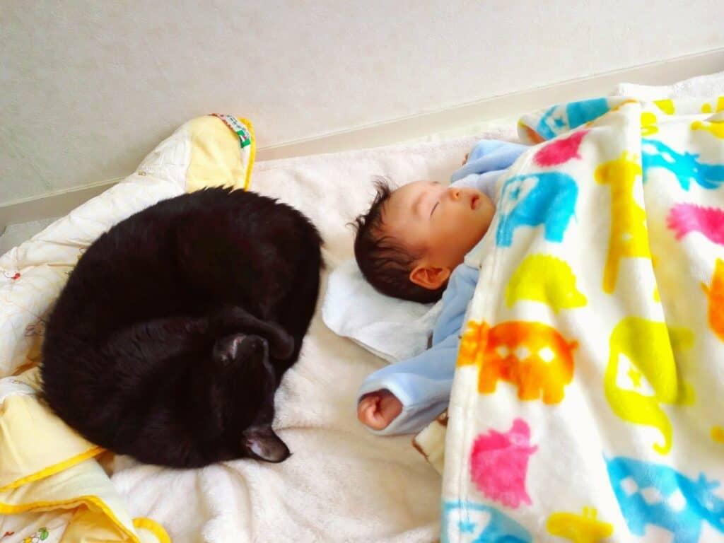 赤ちゃんと猫が一緒に暮らすための注意点
