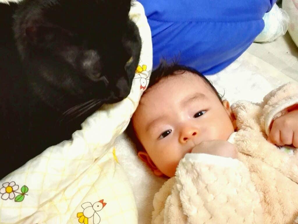 赤ちゃんと猫の距離感に注意