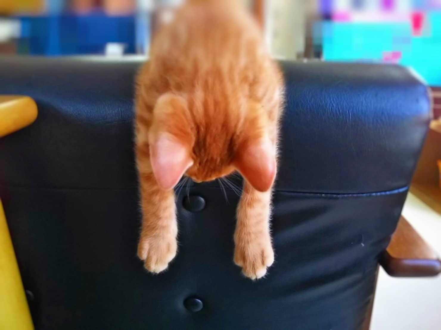 赤ちゃんがいる家庭で猫を飼っても大丈夫? 猫と赤ちゃんが一緒に暮らす時の注意点