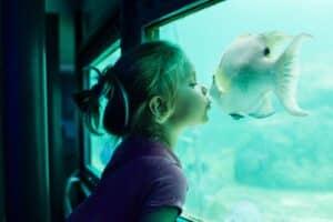 【神奈川県のおでかけにおすすめ】0歳~5歳の子供連れで楽しめる人気スポット25選!