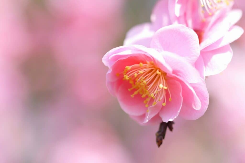 冬の花にちなんだおしゃれな女の子の名前
