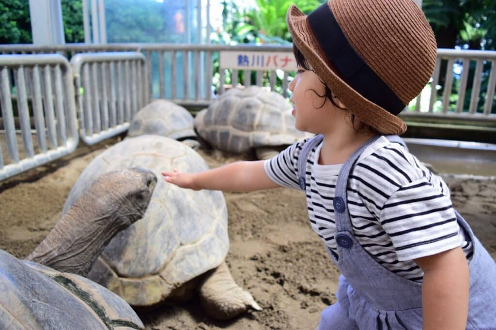 ココがポイント! 赤ちゃんと動物園を楽しむコツ