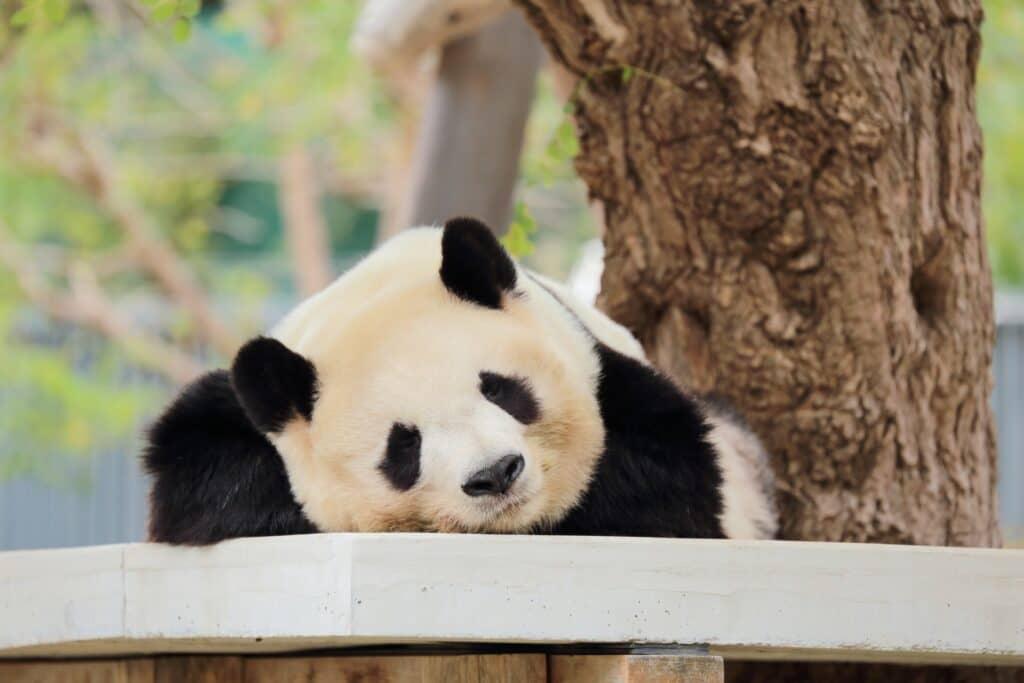 赤ちゃんと行くのにおすすめの動物園【関西編】