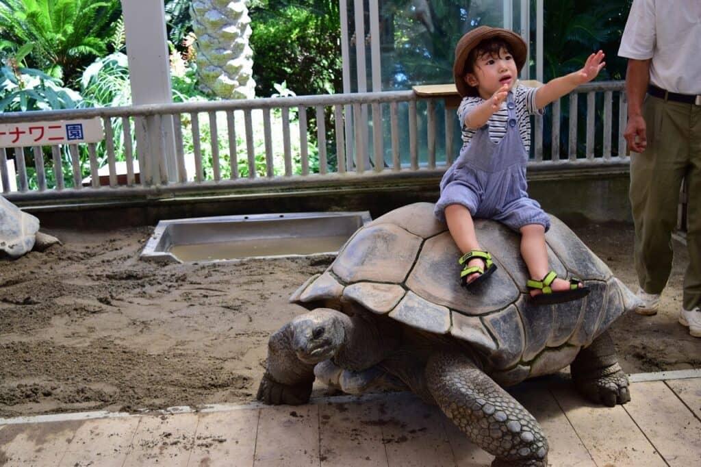 赤ちゃんと動物園を楽しもう!