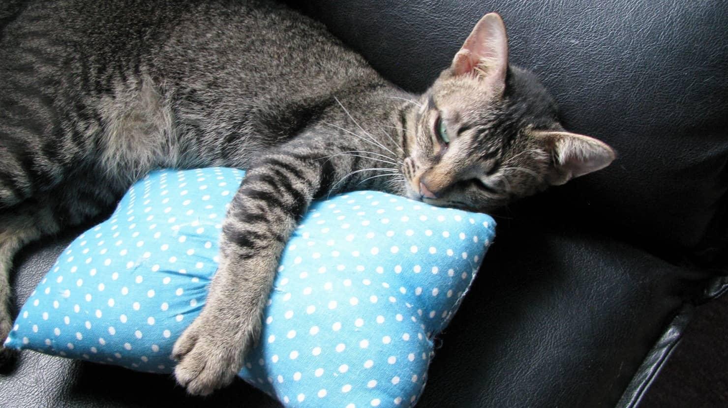 抱き枕は妊婦さんのお助けアイテム! 選び方やおすすめ11選を紹介