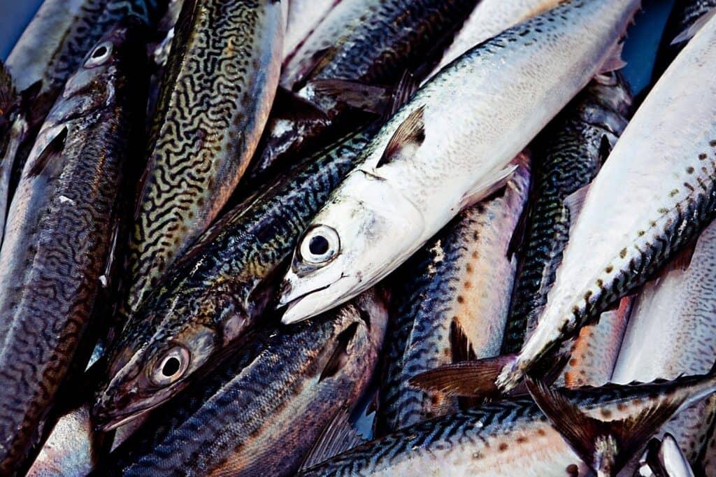 細菌やウイルスが潜んでいる可能性のある生魚に注意