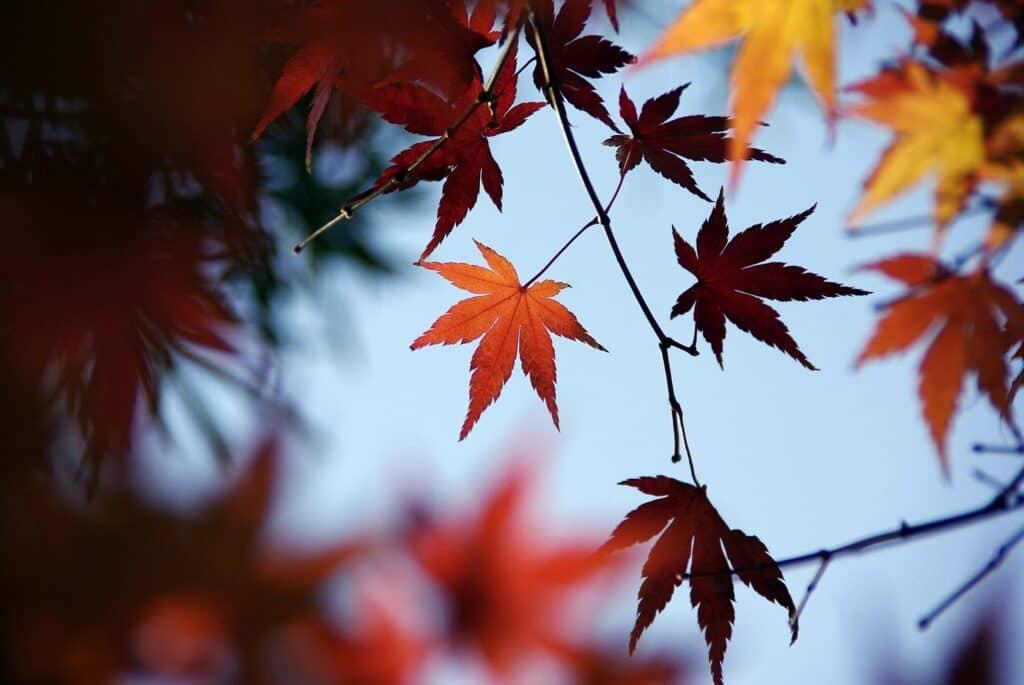 秋の花にちなんだ男の子の名前