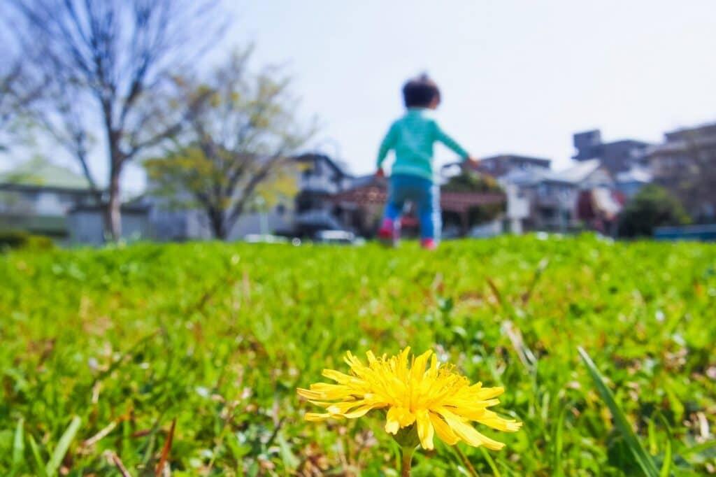 古風・和風な男の子の名前:春をイメージする名前