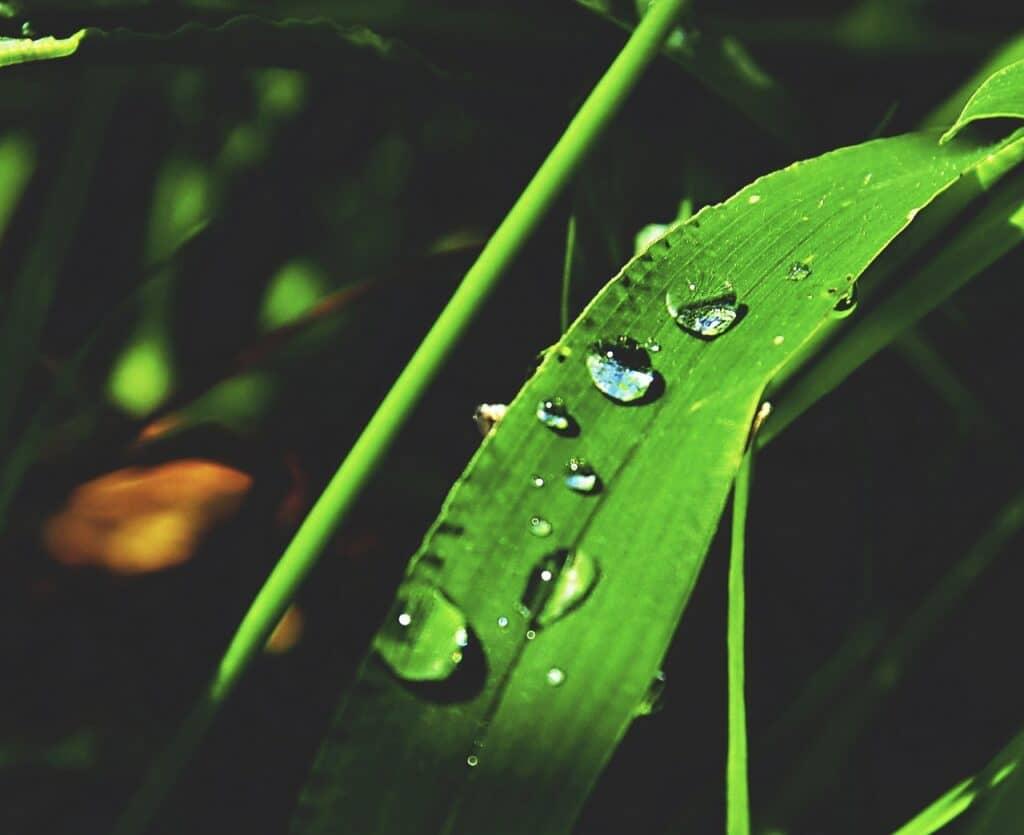 漢字一文字の男の子名前【植物】