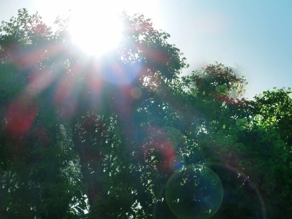 直射日光が当たらないこと