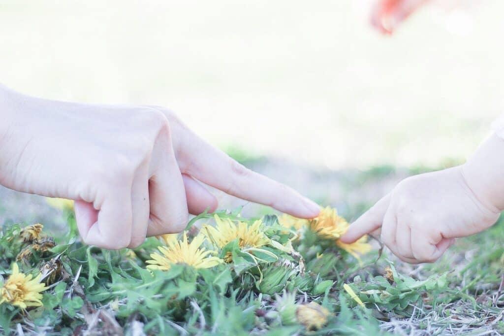 植物をイメージする女の子の名前