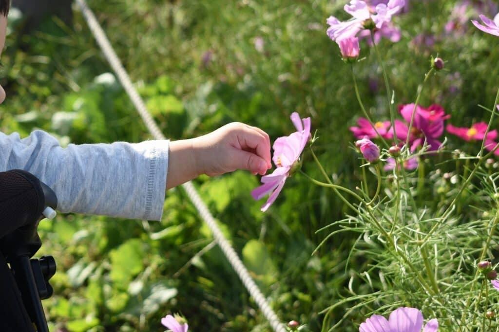 花をイメージする女の子の名前