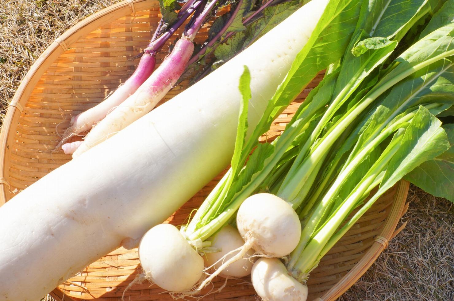 離乳食におすすめ! 大根とかぶは栄養豊富