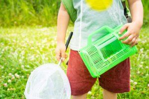 子供におすすめの虫かご9選 採集・飼育・カブトムシ用など用途別に紹介