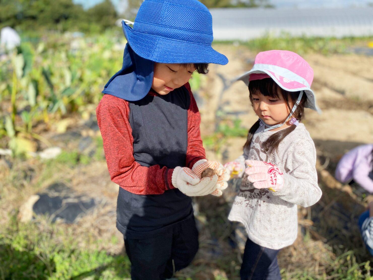 育てる野菜は好き・嫌いどっちがおすすめ?